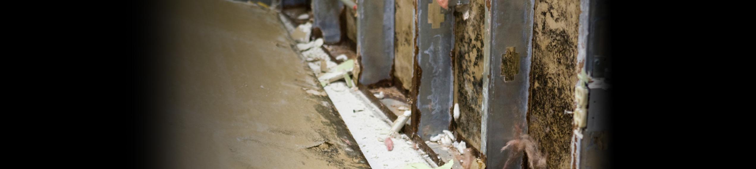 Mold remediation by Paul Davis Restoration of Greater Seattle